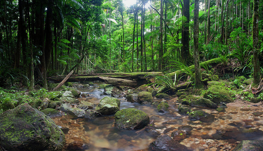 Wilderness Rainforest Photograph by Davidf
