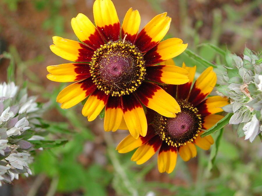 Wild Flower Photograph - Wildflower 5 by Michael Rushing