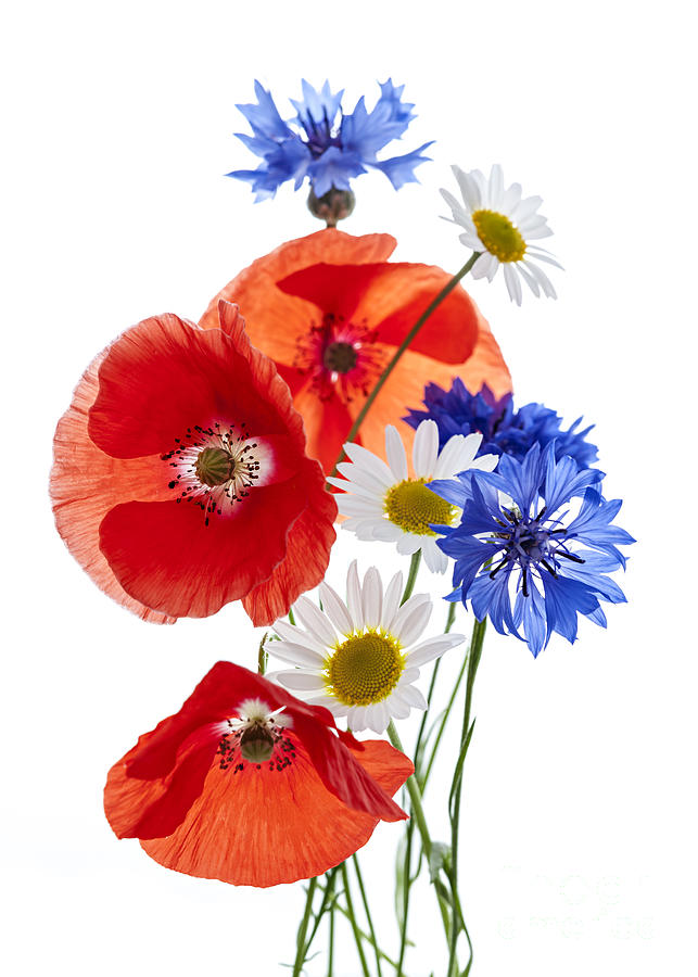 Flowers Photograph - Wildflower Arrangement by Elena Elisseeva
