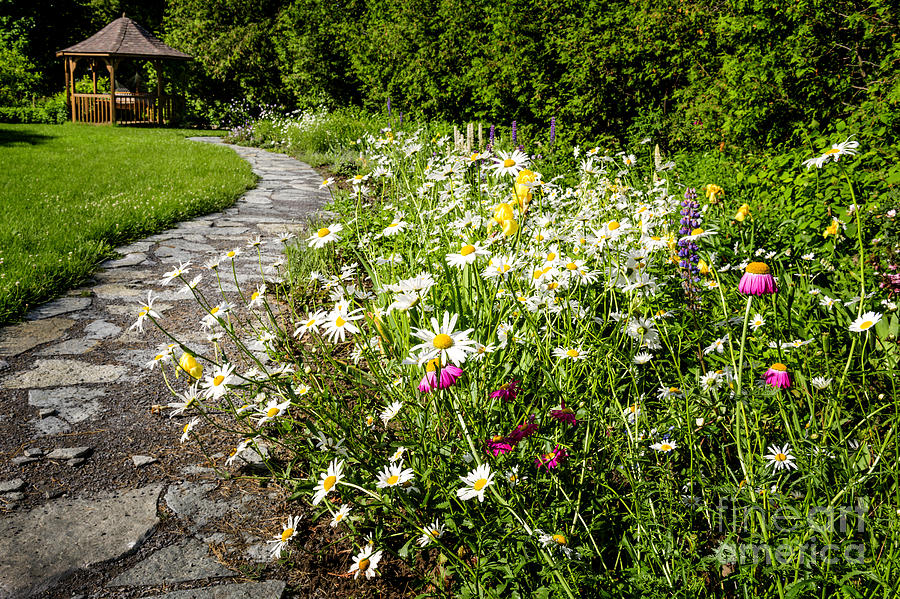 Garden Photograph - Wildflower Garden And Path To Gazebo by Elena Elisseeva