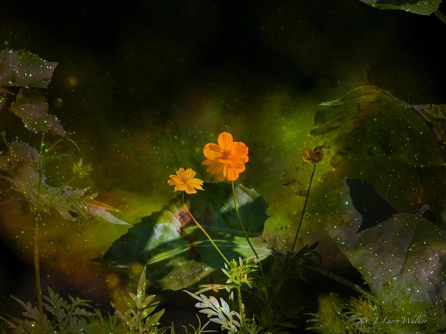 Wildflower In The Twilight Zone by J Larry Walker