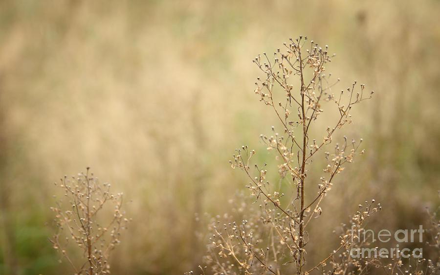 Bent Photograph - Wildflower by Jolanta Meskauskiene