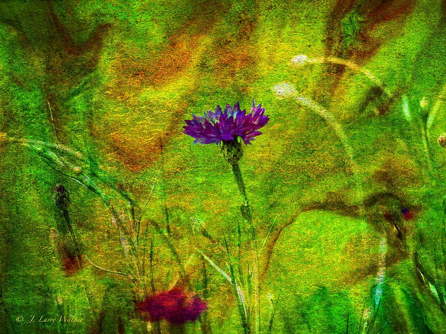 Wildflower Pettifoggery by J Larry Walker