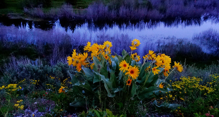 Wildflowers At Sunset Photograph - Wildflower Reflection by Dan Sproul