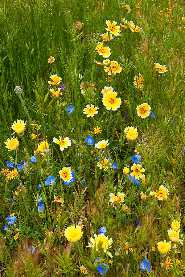 Wildflower Salad - Spring In Central California Photograph