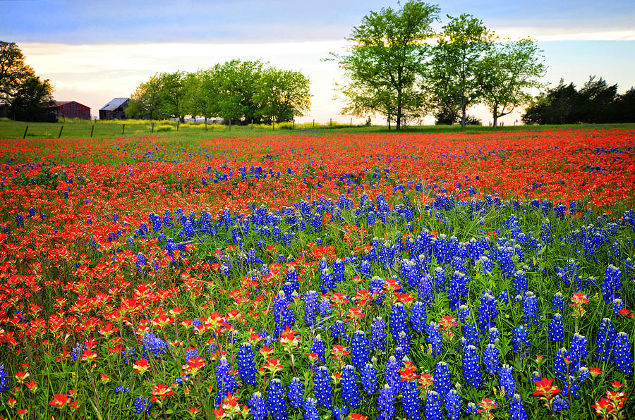 Tx Photograph - Wildflower Tapestry by Lynn Bauer