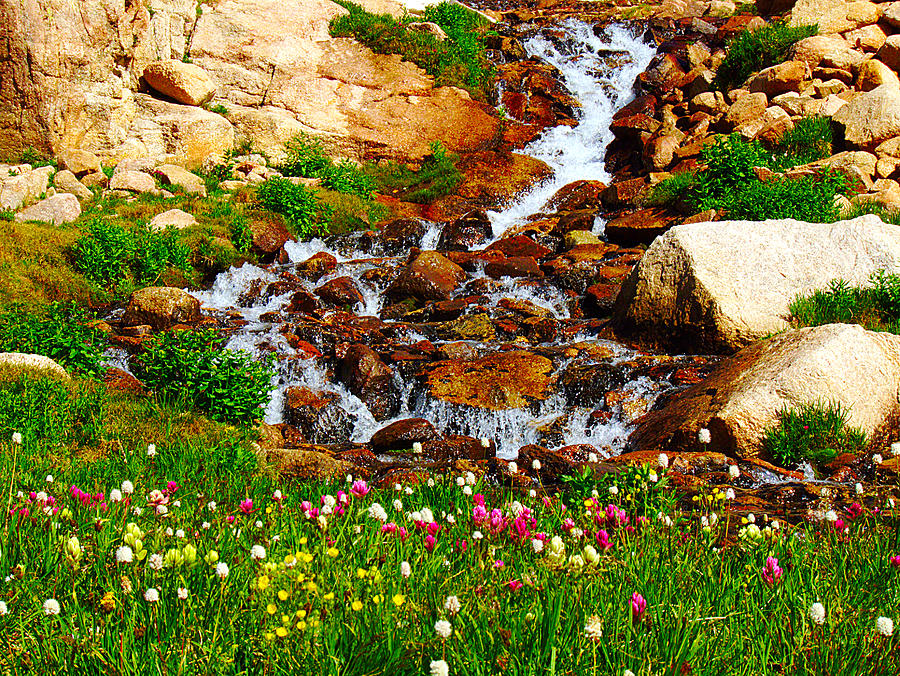 Wildflower Photograph - Wildflower Waterfall by Tranquil Light  Photography