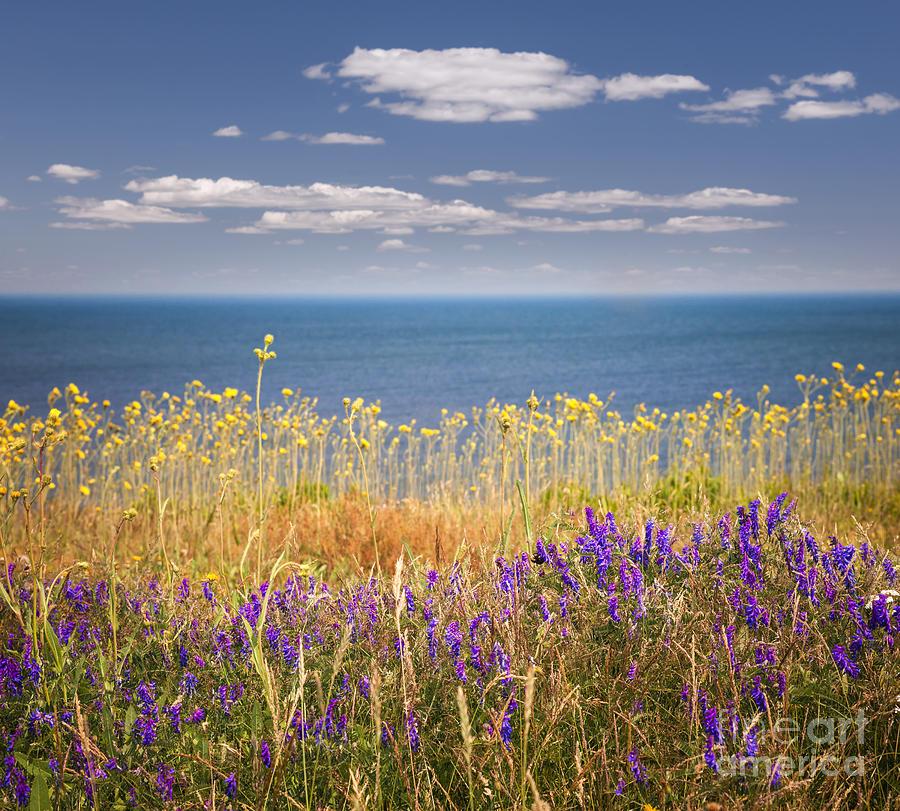 Wildflowers Photograph - Wildflowers And Ocean by Elena Elisseeva