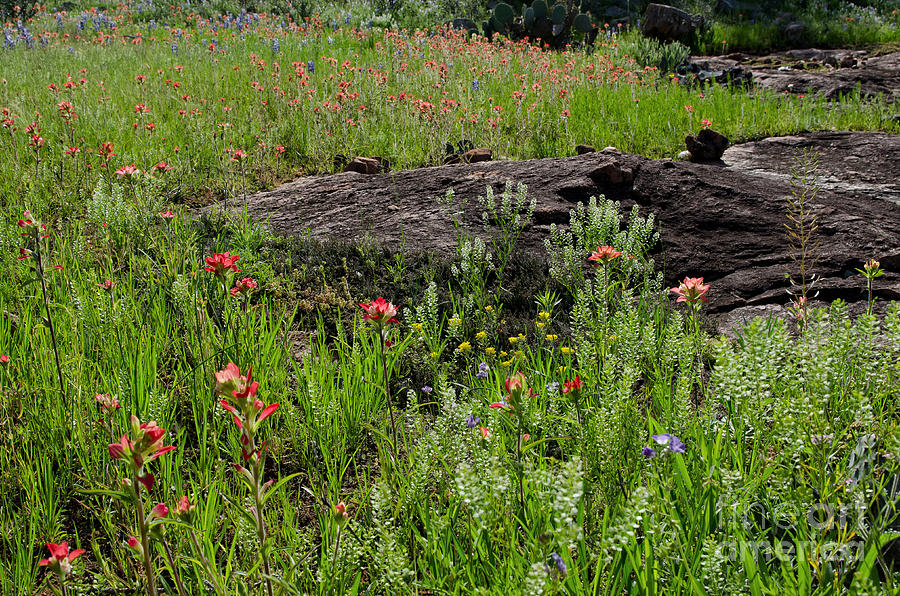 Landscape Photograph - Wildflowers At Reveille Peak Ranch by Cathy Alba