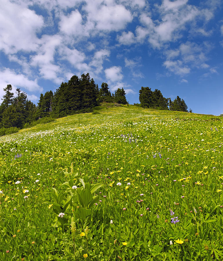 Flowers Photograph - Wildflowers In North Cascades - Washington by Brendan Reals