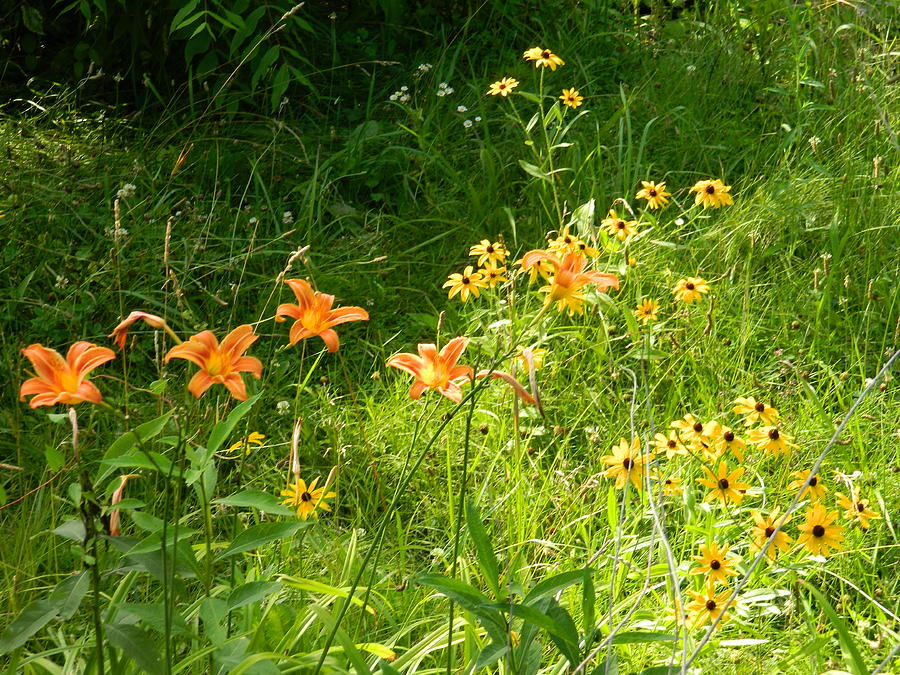 Flowers Photograph - Wildflowers by Linda Brown