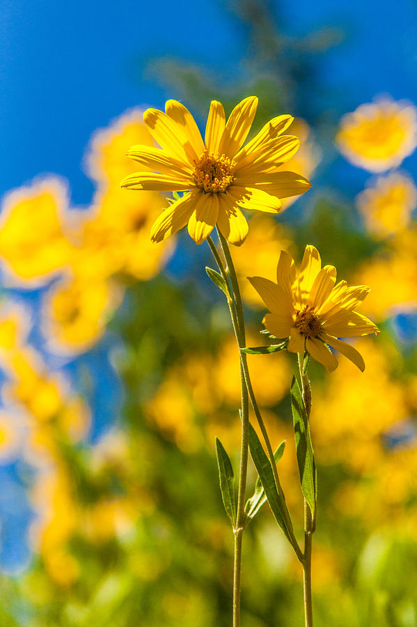 Flowers Photograph - Wildflowers Standing Out by Chad Dutson