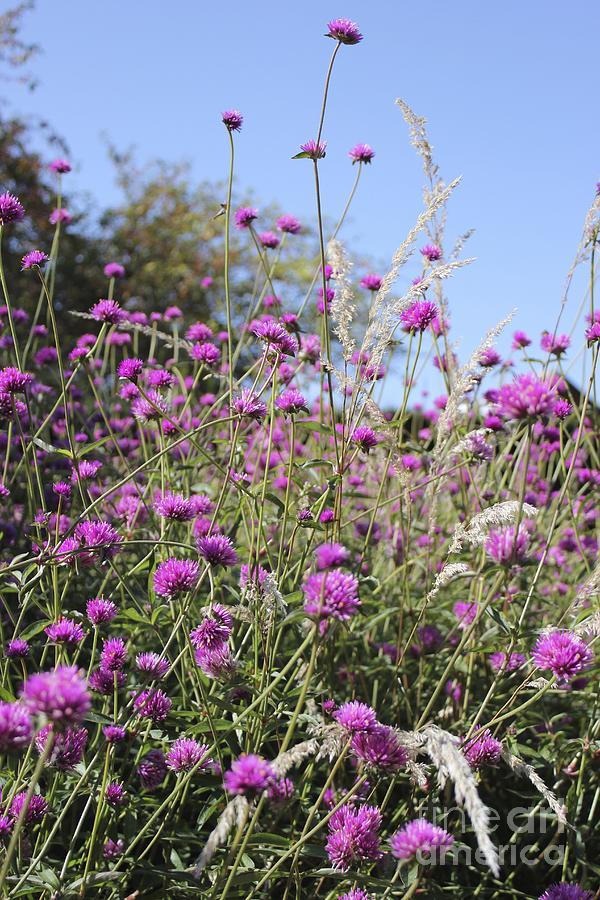 Purple Photograph - Wildflowers by Stephanie Woerndle