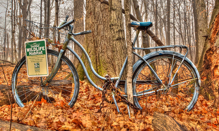 Old Bicycle Photograph - Wildlife Habitat by Anna-Lee Cappaert