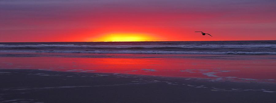 Wildwood Sunrise Dreaming Photograph