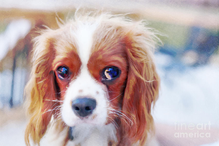 Cavalier Photograph - Will You Play With Me by Kay Pickens