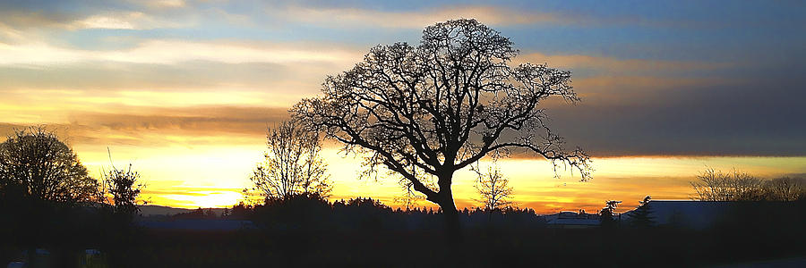 Willamette Valley New Year Sunset IMG 0284 Photograph by Torrey E Smith