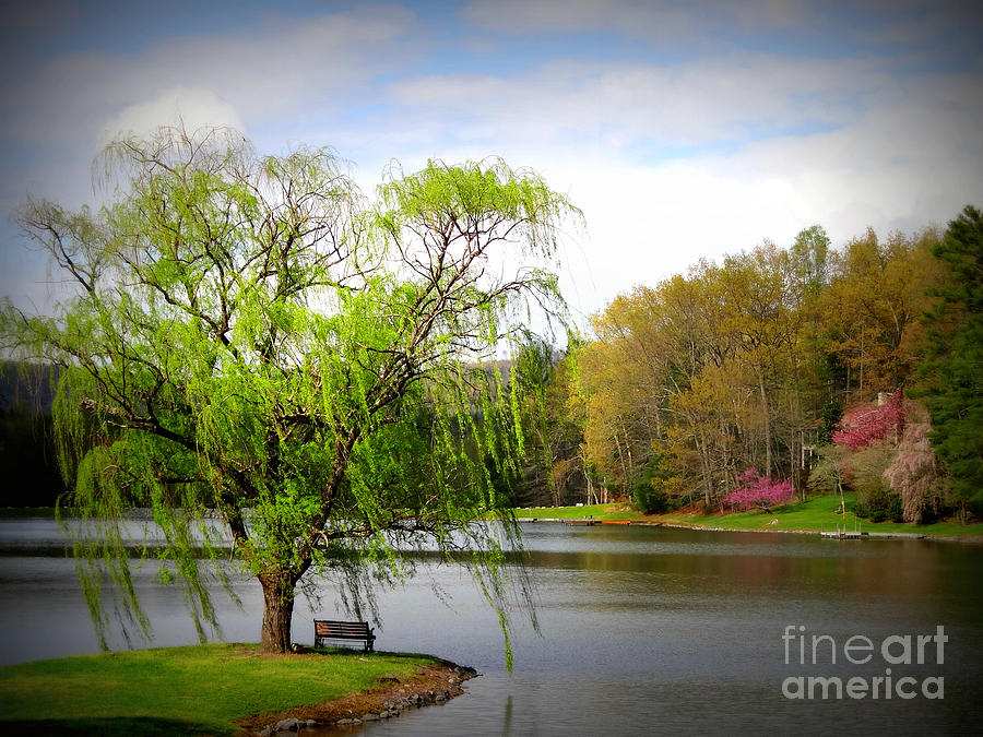 Lake Photograph - Willow Lake by Crystal Joy Photography