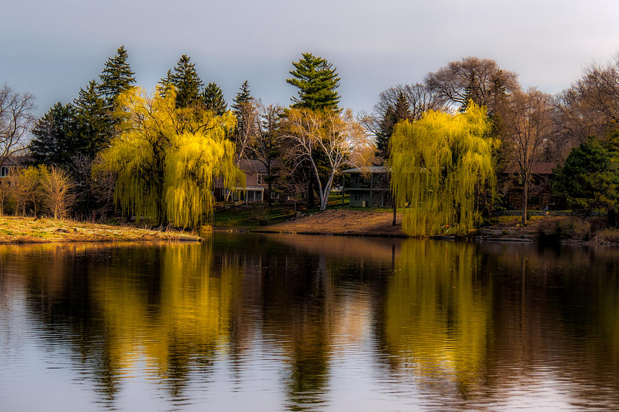 Willow Trees at Silver Lake Photograph by Tom Gort