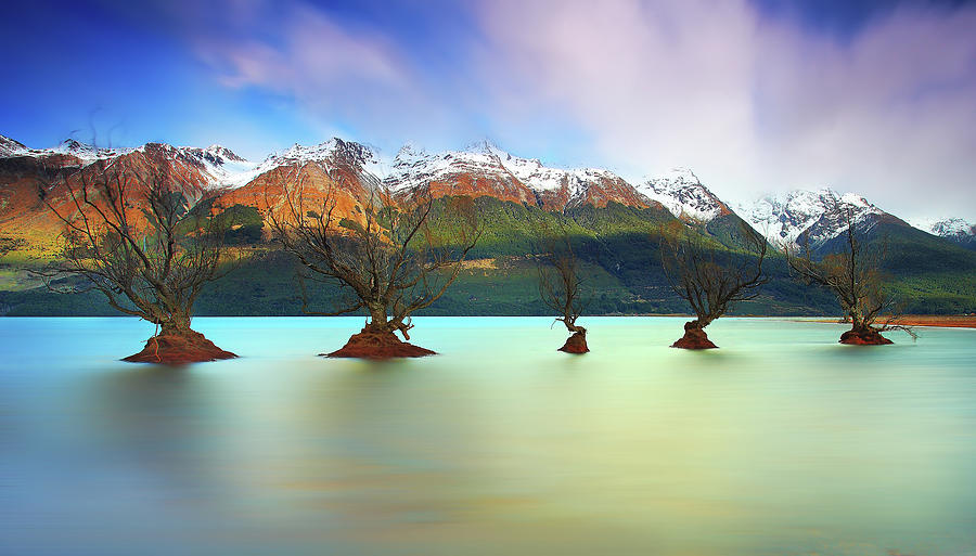 Willow Trees Of Glenorchy Photograph by Fakrul Jamil Photography