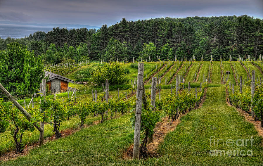 Wine Photograph - Willows Winery by Trey Foerster