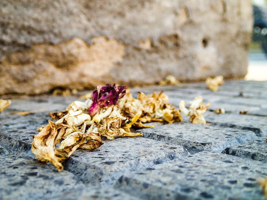 Sidewalk Photograph - Wilt Stone by Tyler Lucas