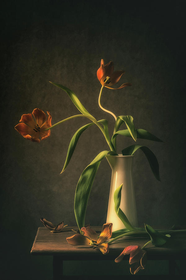 Tulips Photograph - Wilted Tulips by Monique Van Velzen