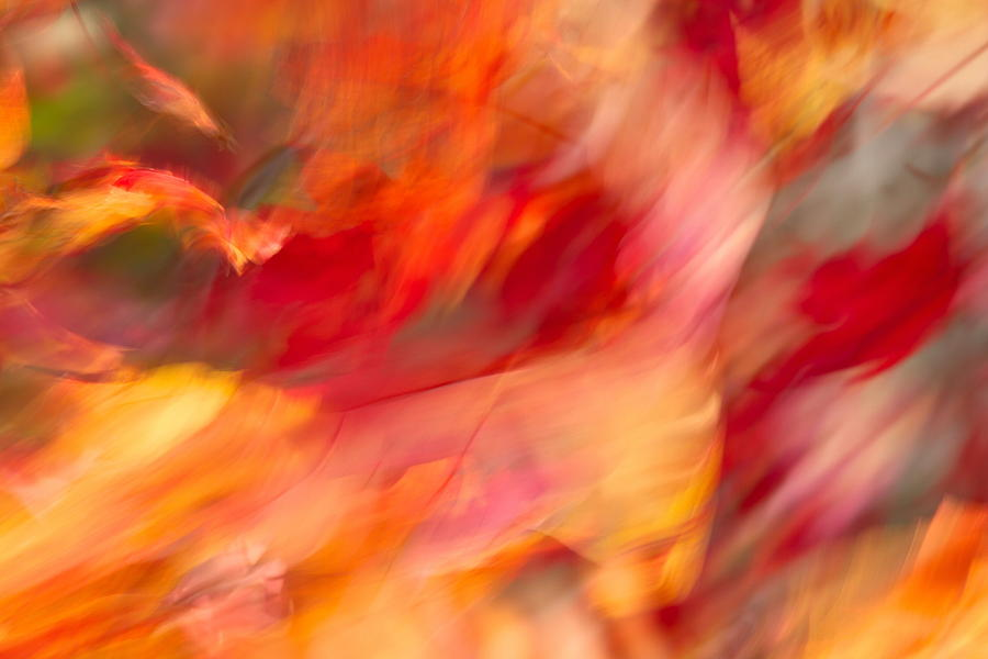 Wind Photograph - Wind And The Autumn Leaves by Nathaniel Kidd