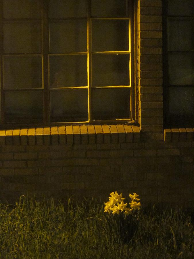 Night Photography Photograph - Wind And Window Flower by Guy Ricketts