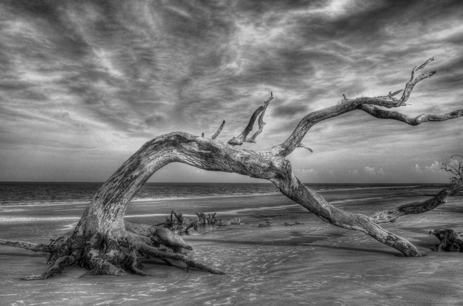 Jekyll Island Photograph - Wind Bent Driftwood Black And White by Greg and Chrystal Mimbs