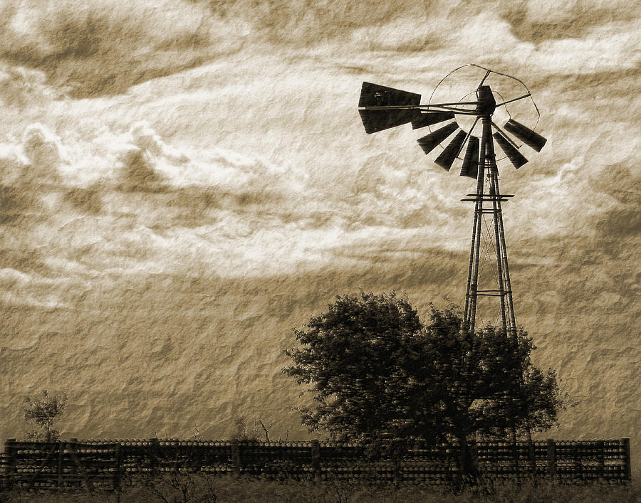 Sepia Photograph - Wind Blown by Tony Grider