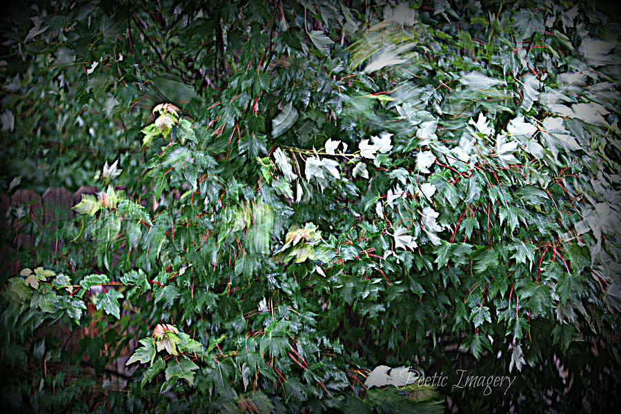 Tree Photograph - Wind by Debbie Sikes