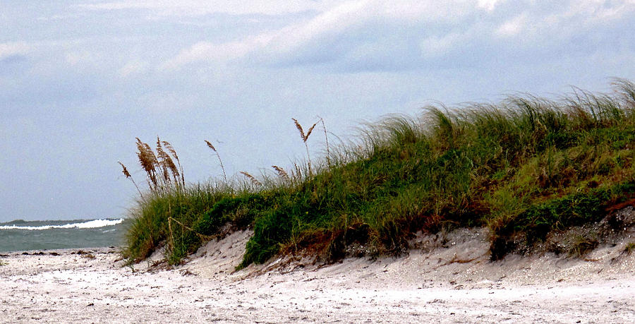 Beach Photograph - Wind In The Seagrass by Ian  MacDonald