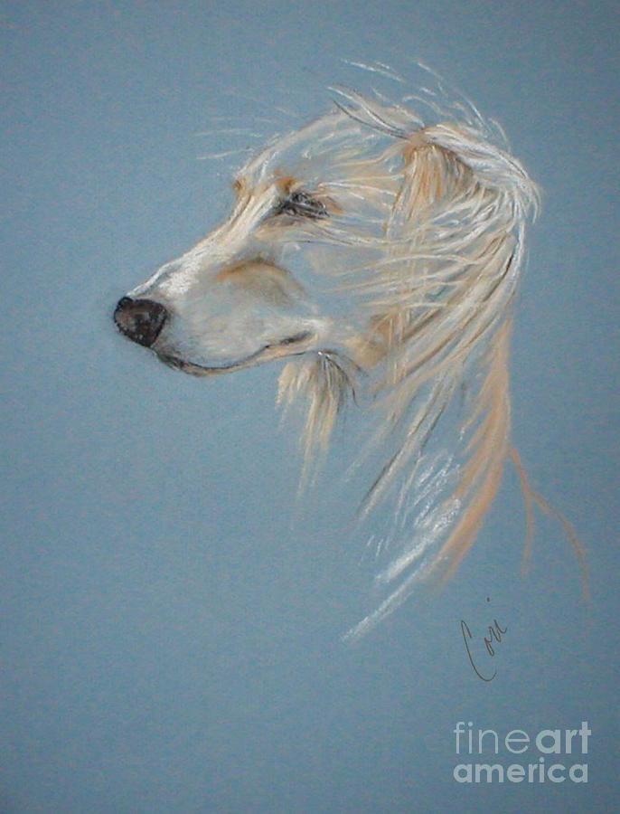 Saluki Drawing - Windhound by Cori Solomon