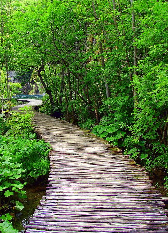Winding Path Photograph By Ramona Johnston