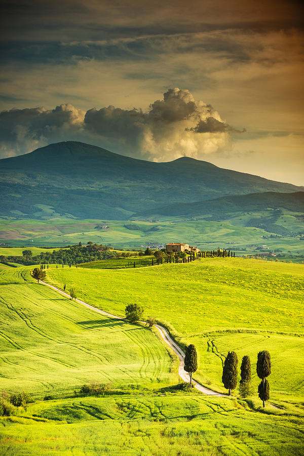 Winding Road In Tuscany Photograph by Gehringj
