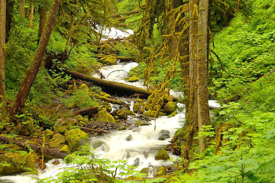 Water Photograph - Winding Through The Forest by Jeff Swan