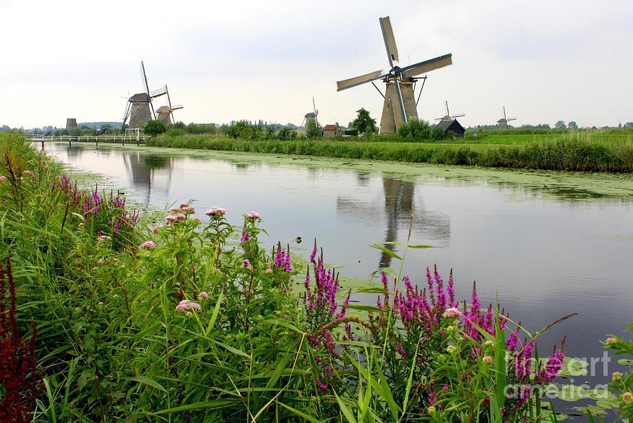 Windmill Photograph - Windmills Of Kinderdijk With Wildflowers by Carol Groenen