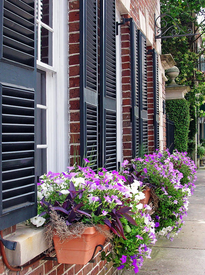 Window Box Photograph - Window Box 2 by Sarah-jane Laubscher
