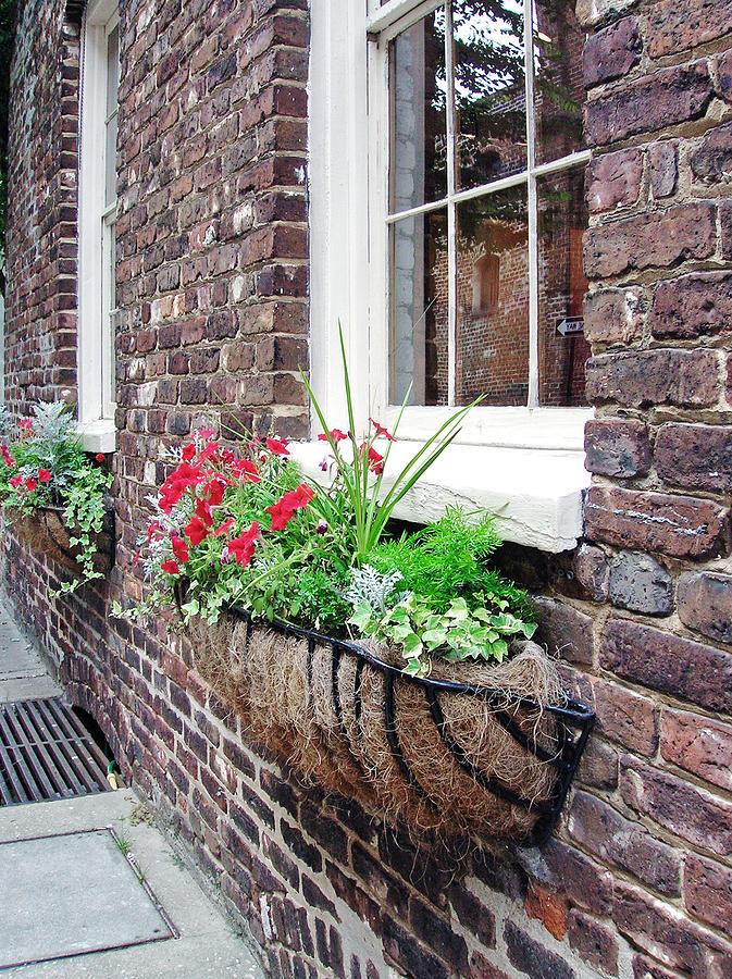Windows Photograph - Window Box 3 by Sarah-jane Laubscher