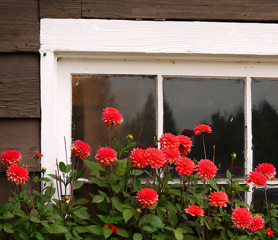 Window Photograph - Window Box Delight by Jordan Blackstone