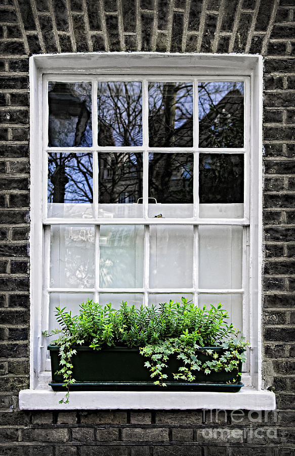 Window Photograph - Window In London by Elena Elisseeva