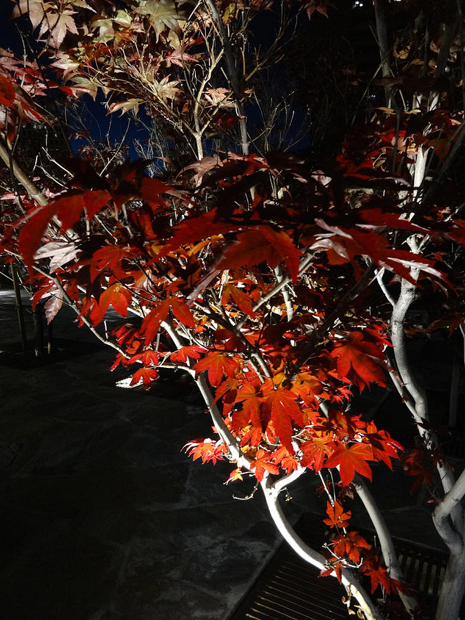 Nature Photograph - Window Of Sky And Flamed Leaves In My Eye by Kenneth James