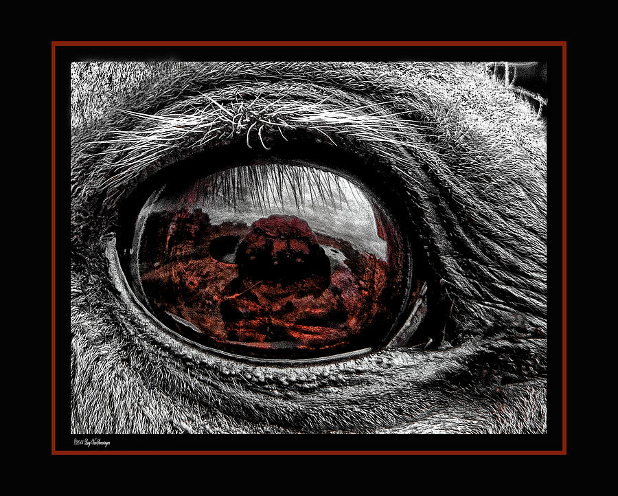 Window Photograph - Window To His Soul by Lucy VanSwearingen