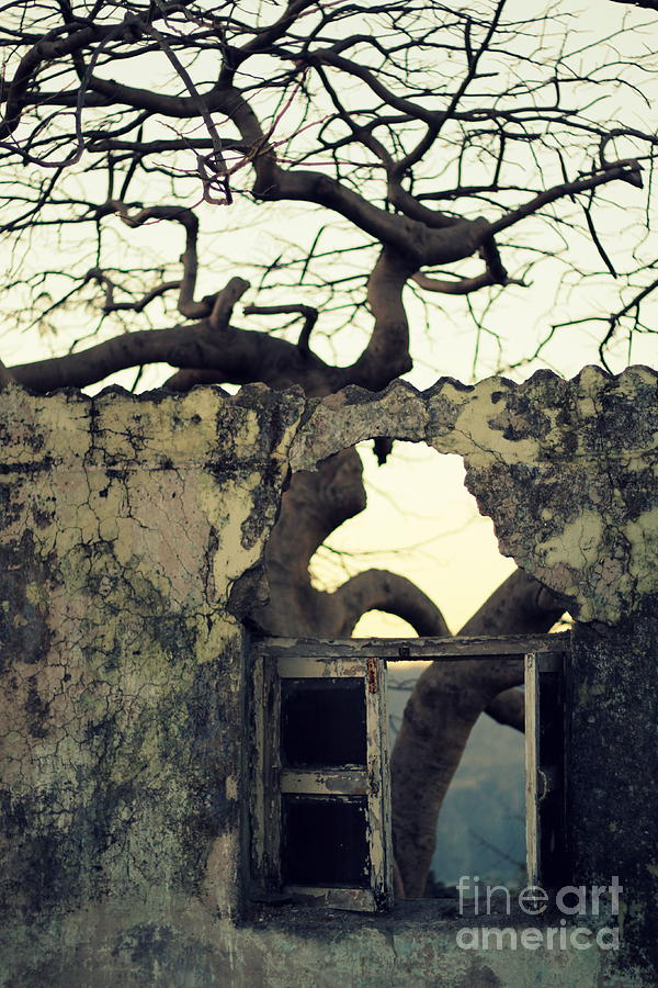 Photograph - Window by Vishakha Bhagat