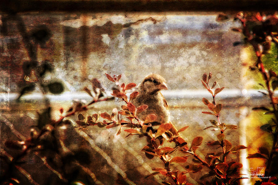 Birds Photograph - Window Wren by Dan Quam