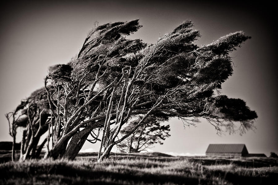 New Zealand Photograph - Windswept by Dave Bowman