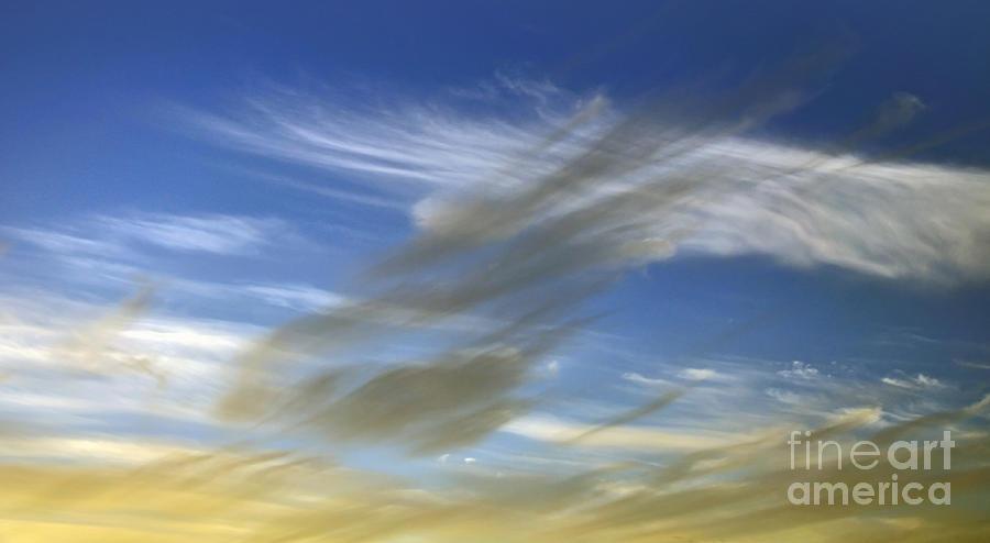 Windswept Photograph - Windswept by Kaye Menner
