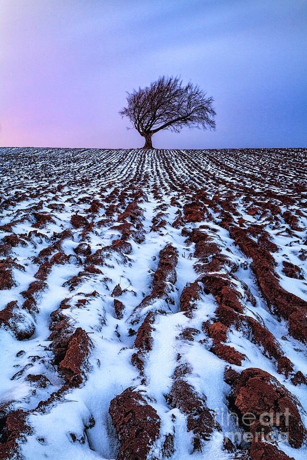 Snow Photograph - Windswept Tree Scotland by John Farnan