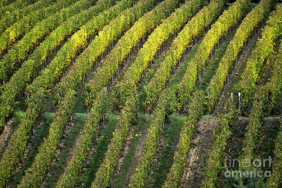 Heiko Photograph - Wine Acreage In Germany by Heiko Koehrer-Wagner